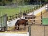 casa_rural_hoces_del_batanejo_caballos