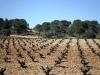 casa_rural_hoces_del_batanejo_entorno_028