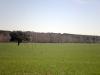 casa_rural_hoces_del_batanejo_entorno_029