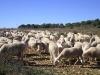 casa_rural_hoces_del_batanejo_entorno_035