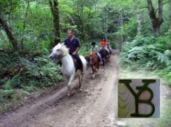 Casa Rural Hoces del Batanejo :: Actividades :: Pupilaje de caballos